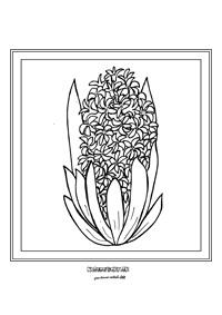 Hyacint - jarné kvietky