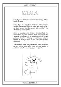 Koala - encyklopédia zvierat