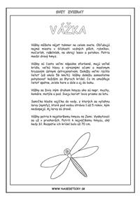 Vážka - encyklopédia zvierat