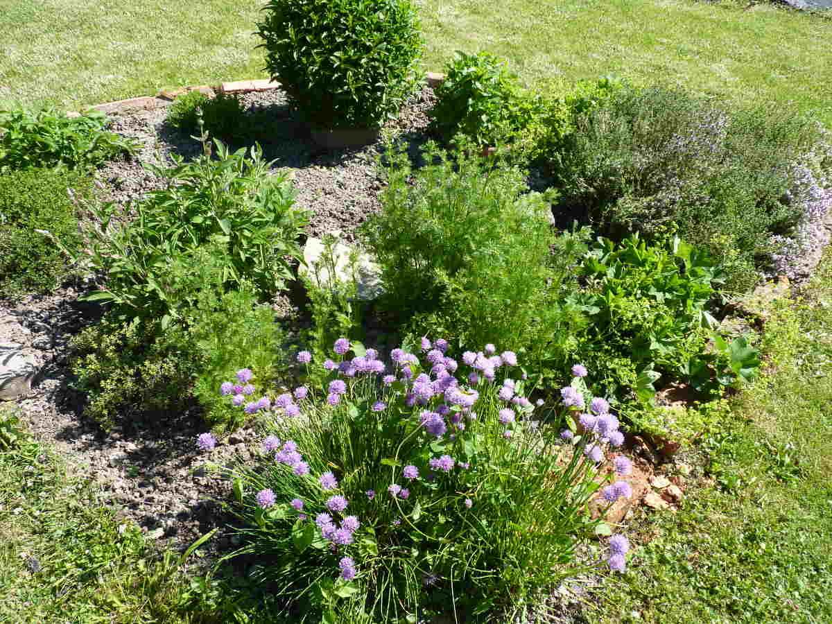 Bylinková záhradka pre deti