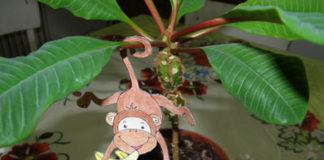 Opica na zavesenie - aktivity pre deti