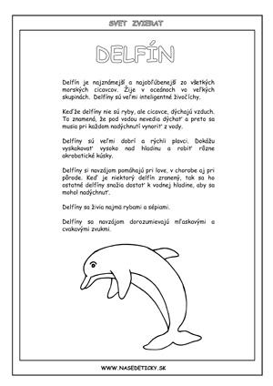 Delfíny - informácie