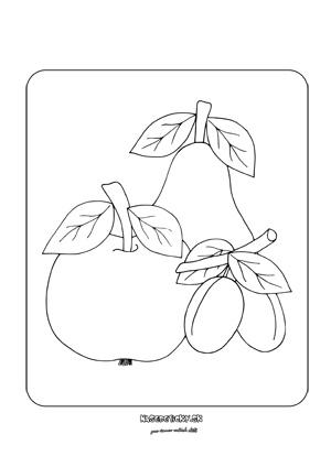 Jablko, hruška a slivky - obrázky na okno