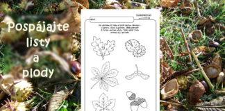 Jesenný pracovný list - spájame listy a plody