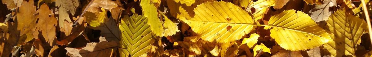 jesenný obrázok s listami