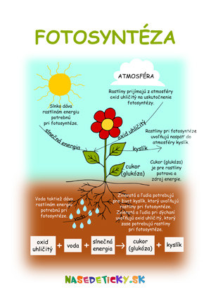 Fotosyntéza - pracovný list